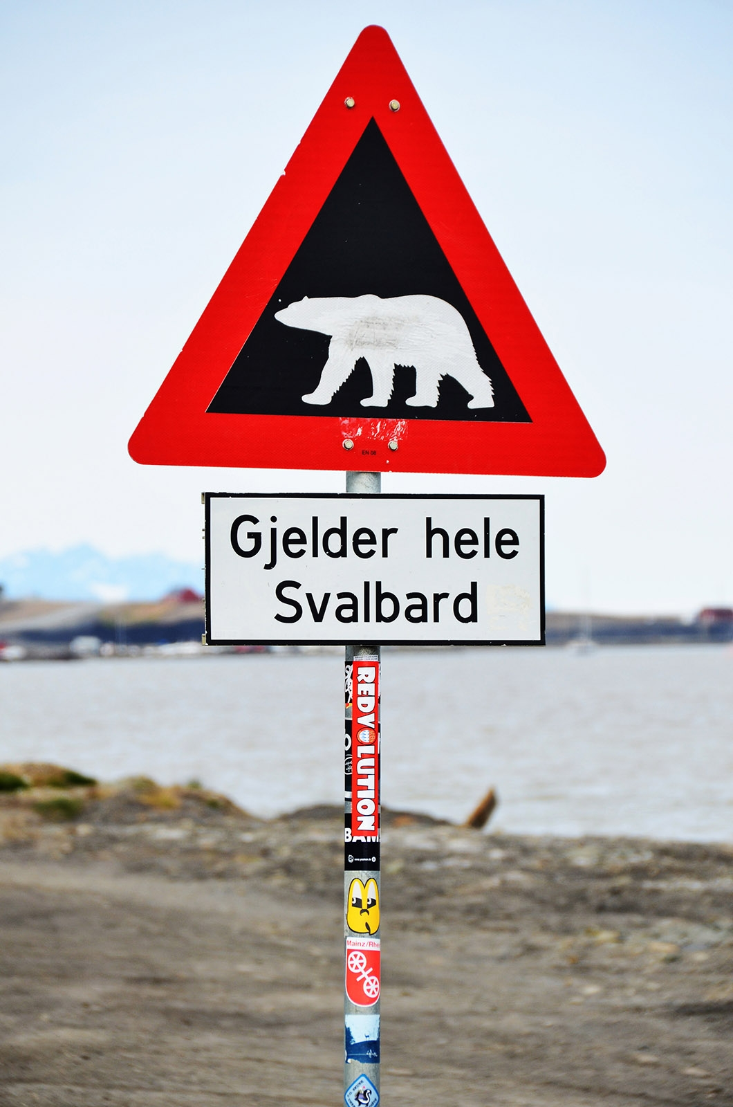Zagrożenie atakiem niedźwiedzia w Arktyce jest realne