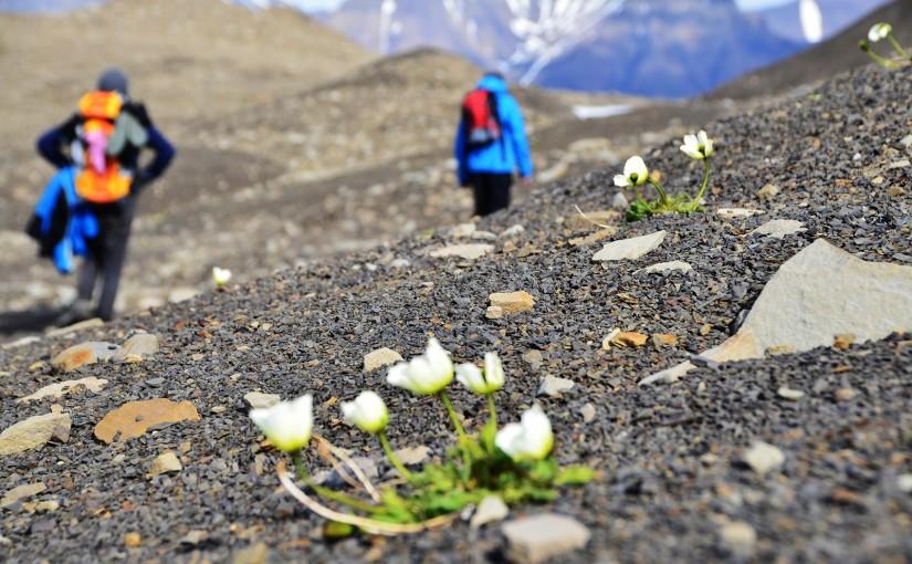 Przyroda na Spitsbergenie